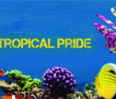 Cairns Tropical Pride – 30 September to 8 October 2017