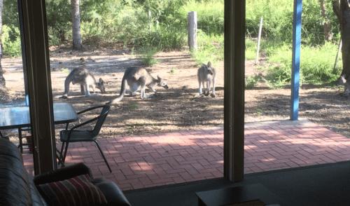 Video: Amphion Lodge – Gippsland –  Victoria